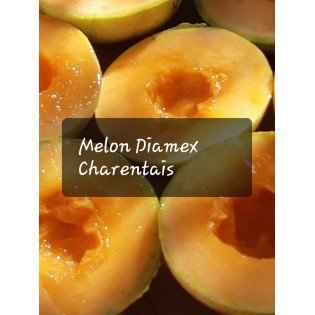 Semences de Melon Diamex Charentais