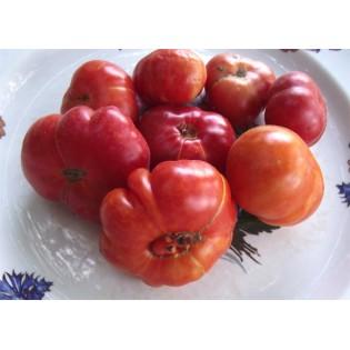 Semences de Tomate Calabache Rouge