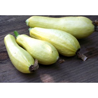 Semences de Courgette Jaune