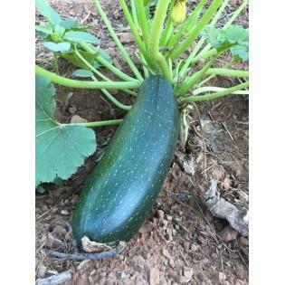 Assortiment de légumes (ref 04)