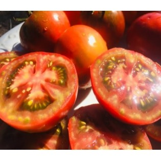 tomate Paul Rebeson