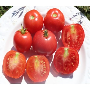 tomates rose claire
