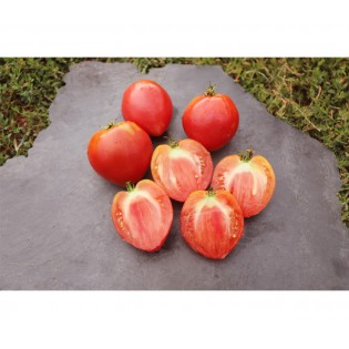 Tomate Cœur de Bœuf Anna Russe