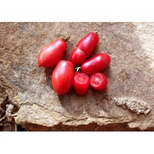 Tomate dix doigts de Naples
