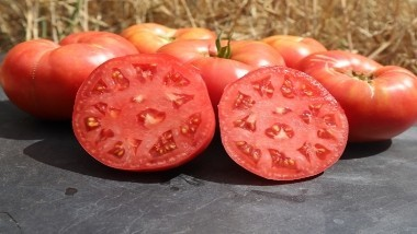 Tomates Rouges - Roses