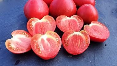 Tomates Cœurs de Bœuf