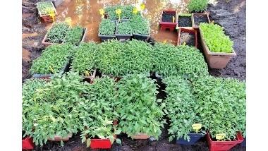 Nos plants de tomates et légumes bio en ligne