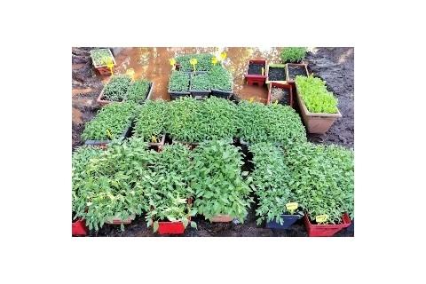 Nos plants soigneusement préparés et livrés chez vous directement