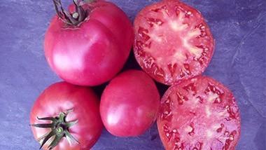 Tomates Noires ou Pourpres