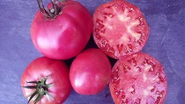Tomates Noires / Pourpres